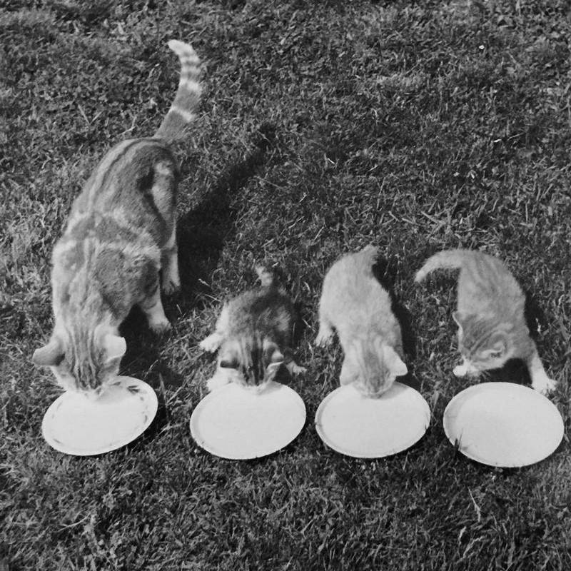 Уолтер Чандоха – человек, который 70 лет фотографировал кошек   23 1