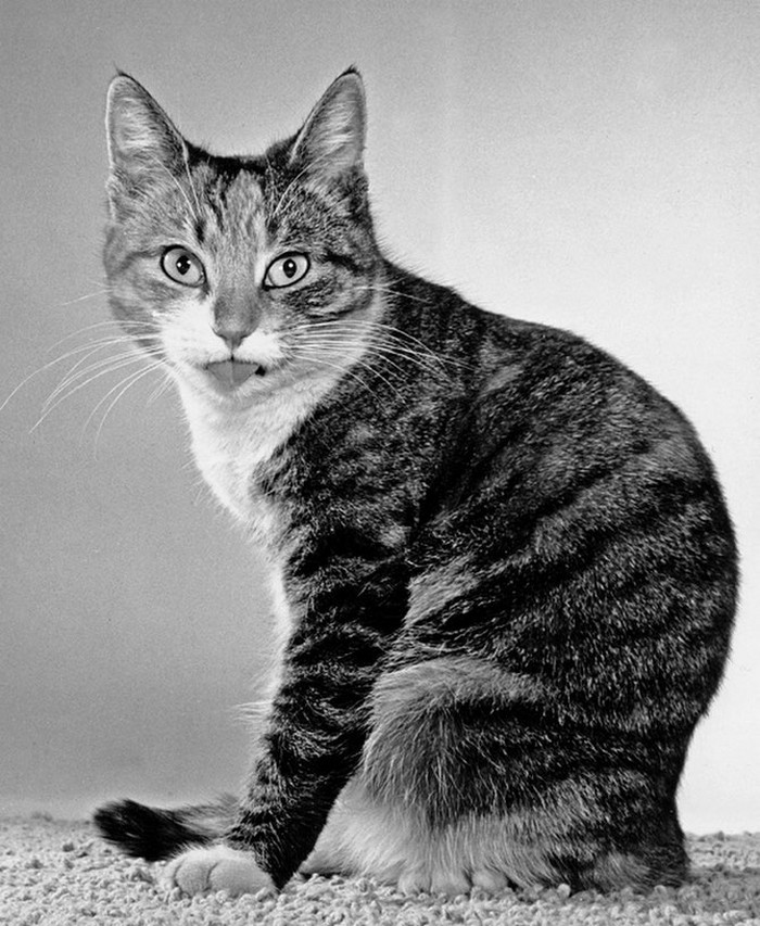 Уолтер Чандоха – человек, который 70 лет фотографировал кошек   29 1
