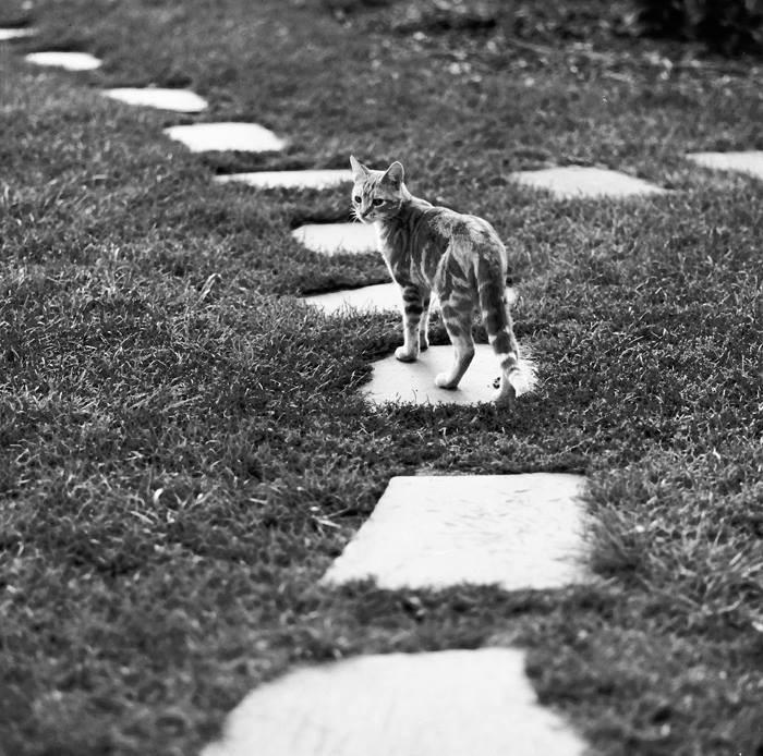 Уолтер Чандоха – человек, который 70 лет фотографировал кошек   29