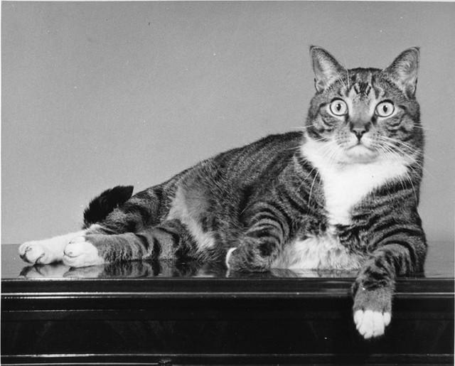 Уолтер Чандоха – человек, который 70 лет фотографировал кошек   33