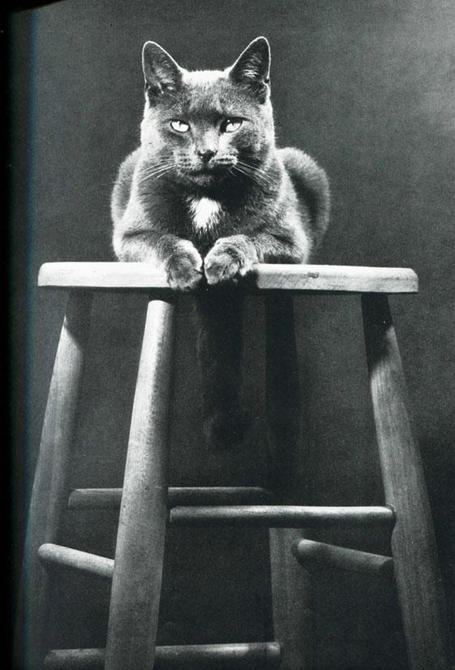 Уолтер Чандоха – человек, который 70 лет фотографировал кошек   35