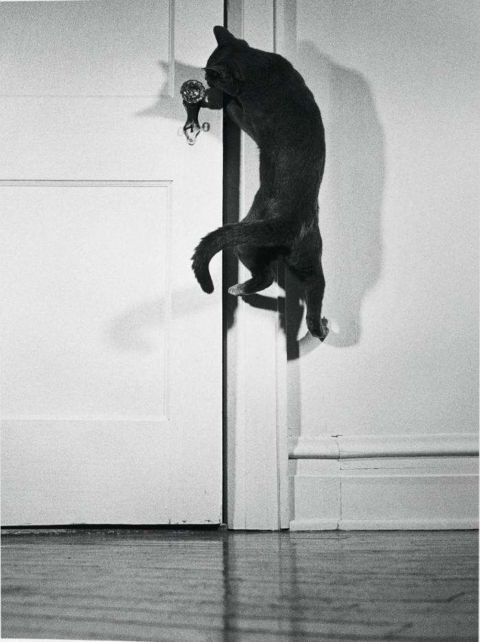 Уолтер Чандоха – человек, который 70 лет фотографировал кошек 36