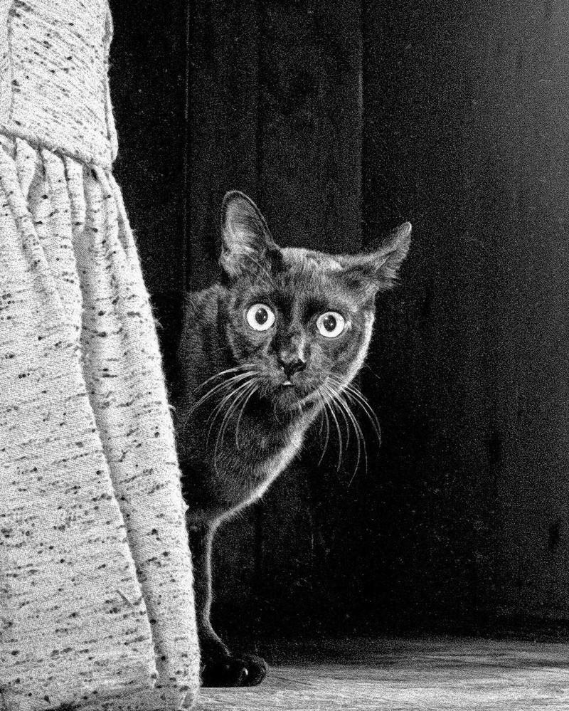 Уолтер Чандоха – человек, который 70 лет фотографировал кошек   5
