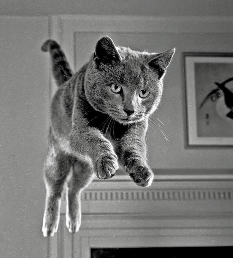 Уолтер Чандоха – человек, который 70 лет фотографировал кошек   6