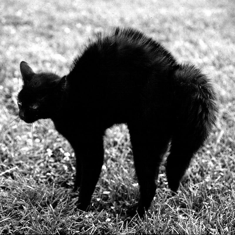 Уолтер Чандоха – человек, который 70 лет фотографировал кошек   7 2