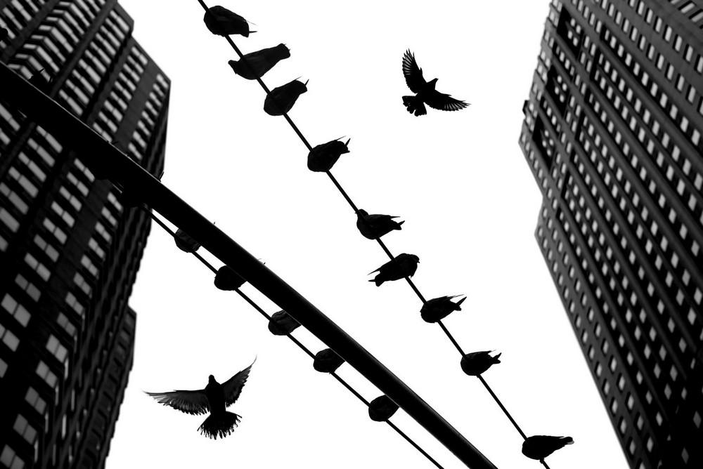 «Метрополис», «Голуби» и «Манхэттен» городского фотографа Алана Шаллера 2