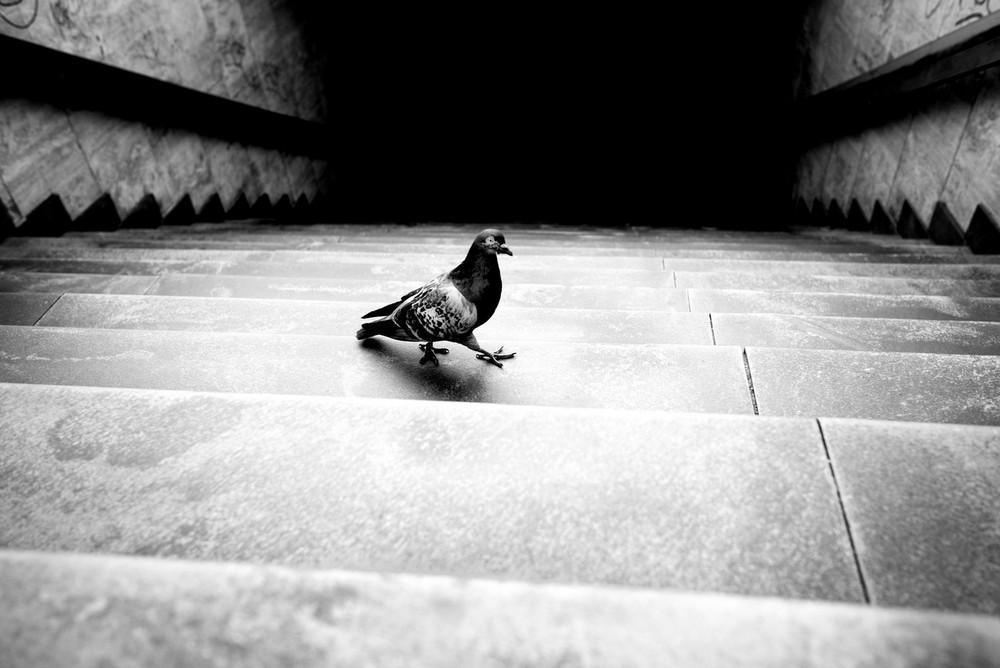 «Метрополис», «Голуби» и «Манхэттен» городского фотографа Алана Шаллера 3