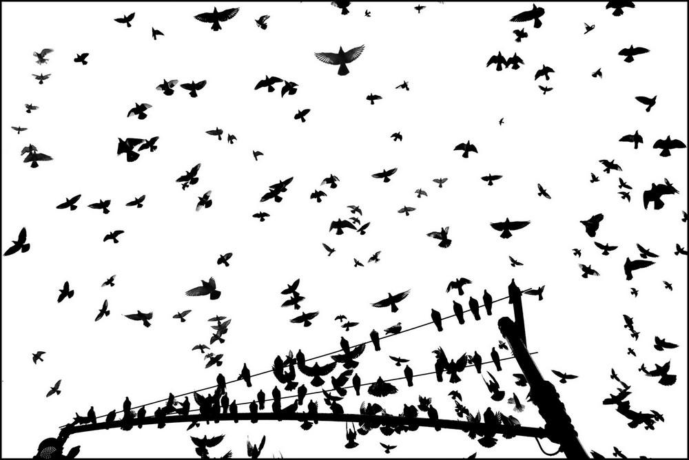 «Метрополис», «Голуби» и «Манхэттен» городского фотографа Алана Шаллера 4