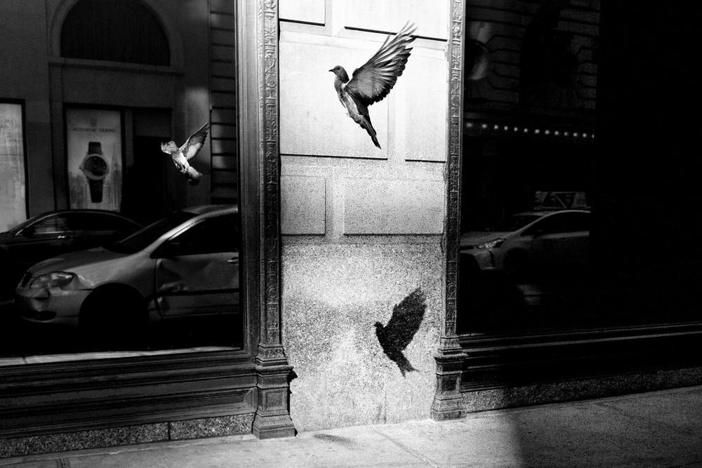 «Метрополис», «Голуби» и «Манхэттен» городского фотографа Алана Шаллера 57