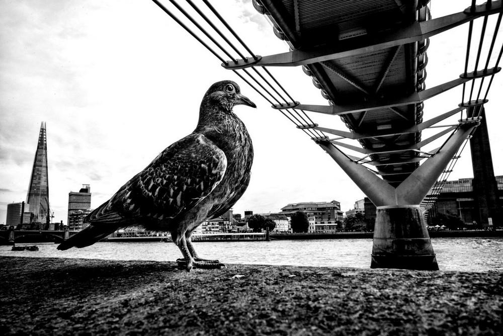«Метрополис», «Голуби» и «Манхэттен» городского фотографа Алана Шаллера 6