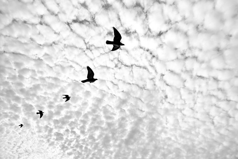 «Метрополис», «Голуби» и «Манхэттен» городского фотографа Алана Шаллера 7
