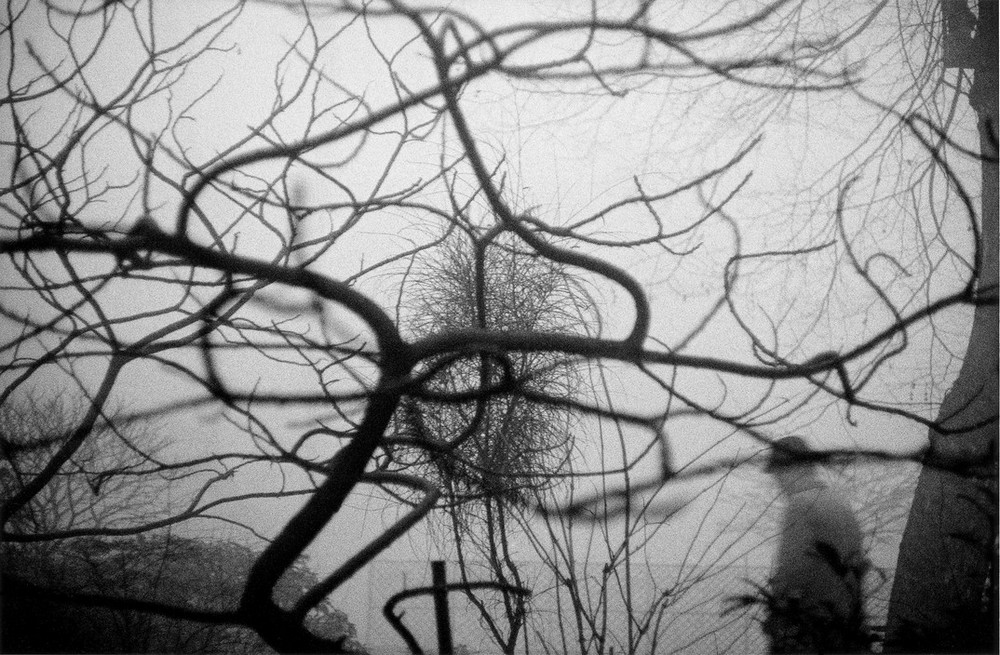 Серхио Ларраин: «Фотографирование – это прогулка в одиночку по вселенной» 13