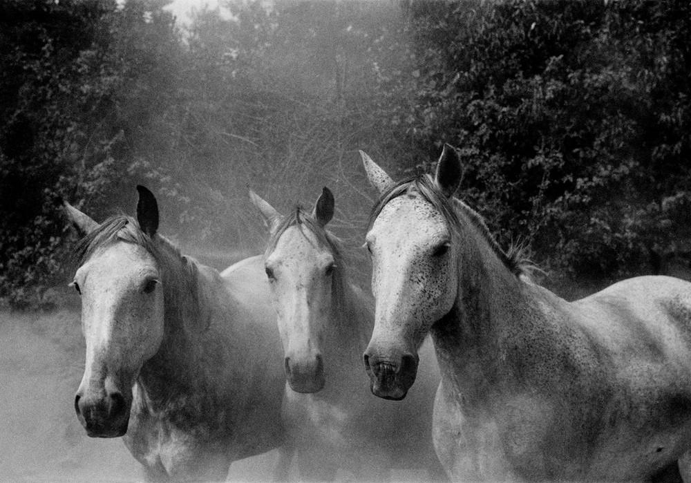 Серхио Ларраин: «Фотографирование – это прогулка в одиночку по вселенной» 22