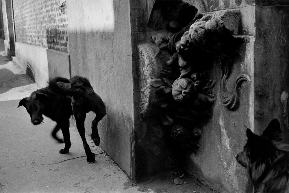 Серхио Ларраин: «Фотографирование – это прогулка в одиночку по вселенной» 4