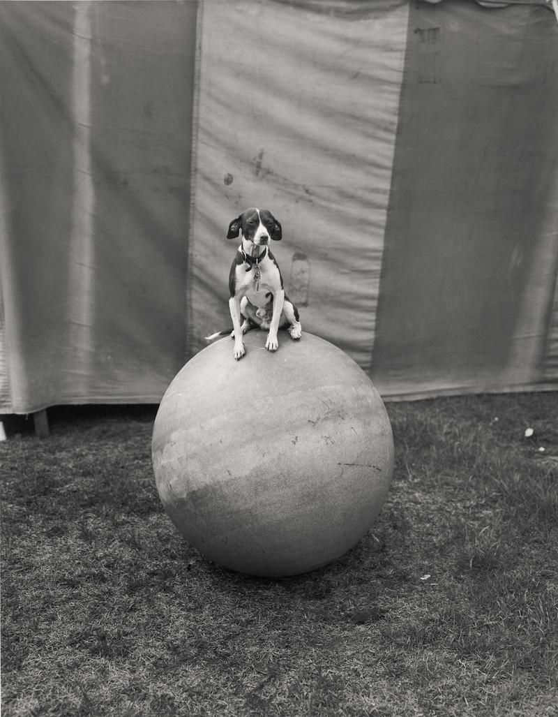 Американская история ужасов: реальные бродячие цирки в документальном фотопроекте Рэндала Левенсона 1971-81гг 6
