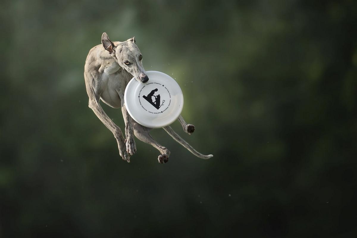 Супер собаки в фотографиях Клаудио Пикколи 1