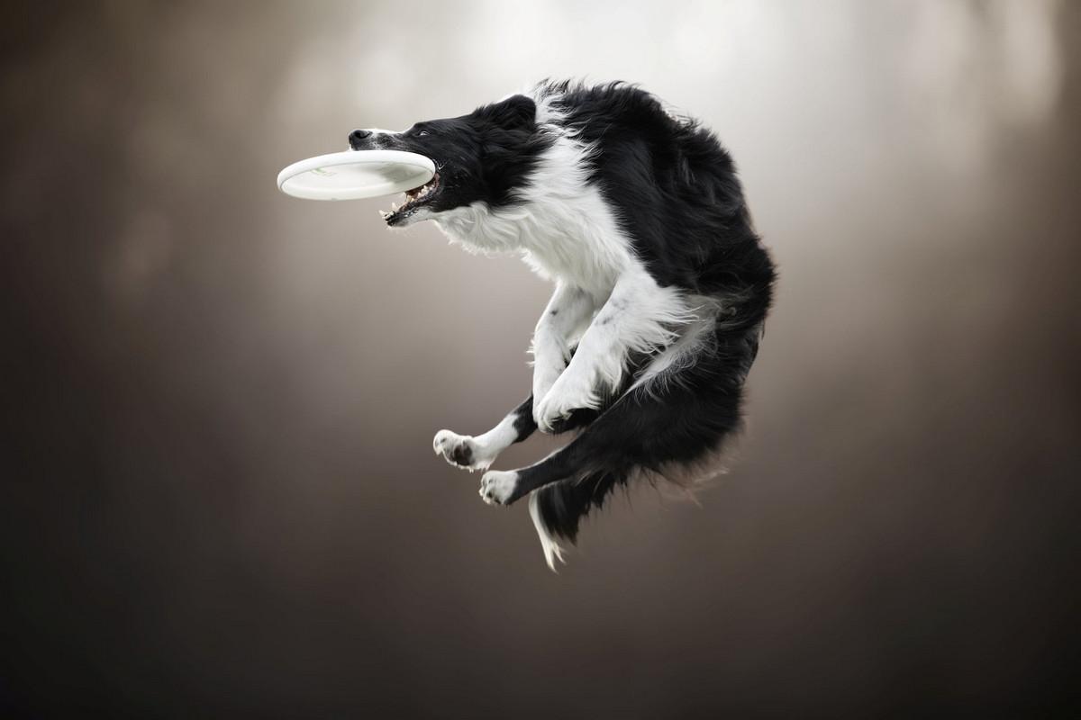 Супер собаки в фотографиях Клаудио Пикколи 10