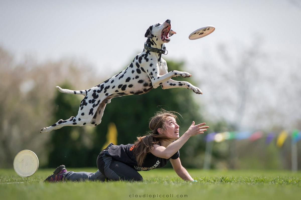 Супер собаки в фотографиях Клаудио Пикколи 16