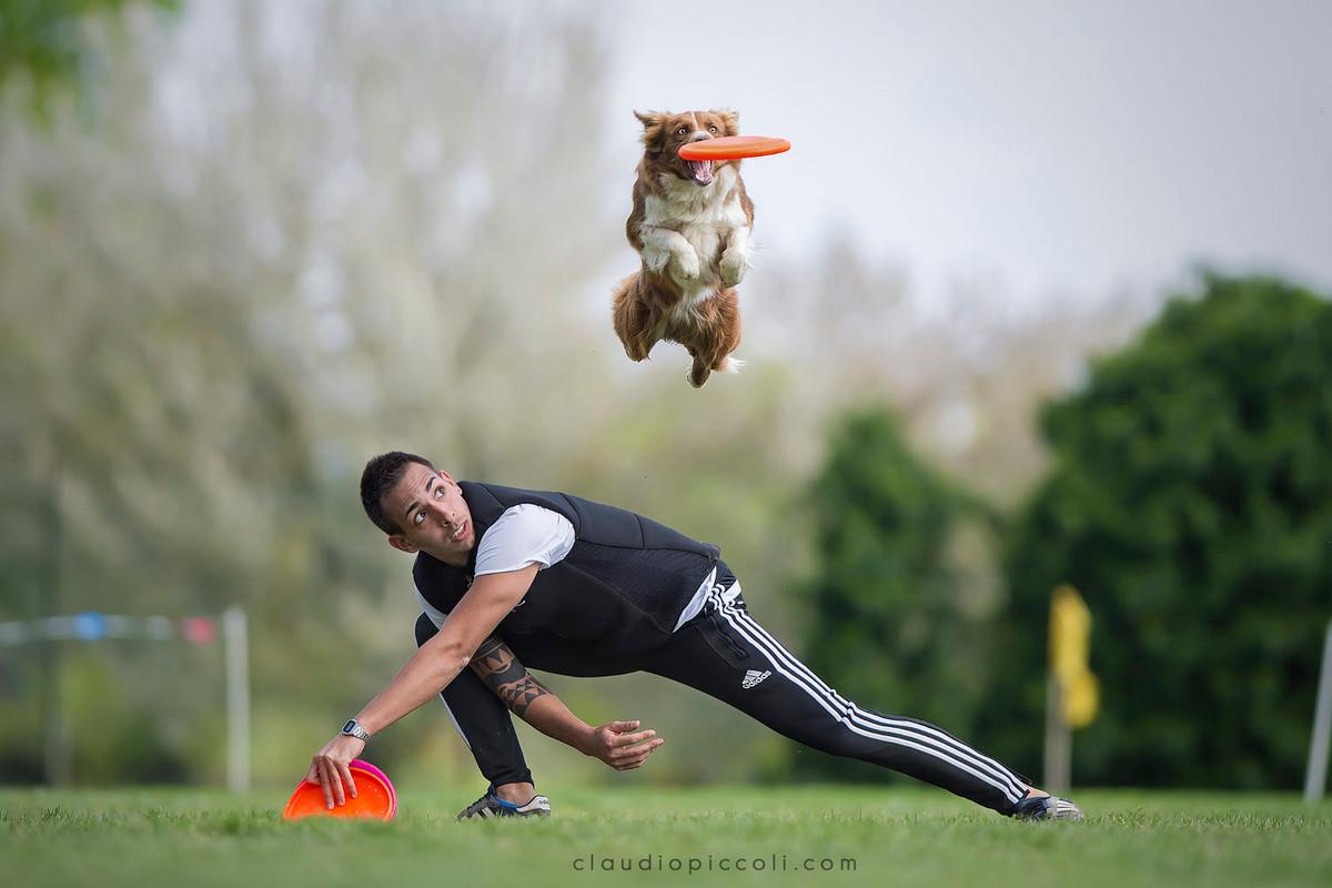 Супер собаки в фотографиях Клаудио Пикколи 18
