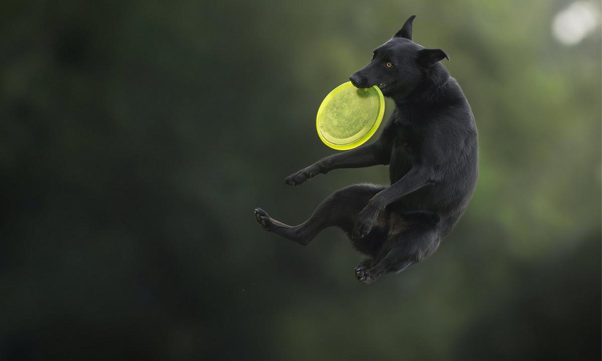 Супер собаки в фотографиях Клаудио Пикколи 2