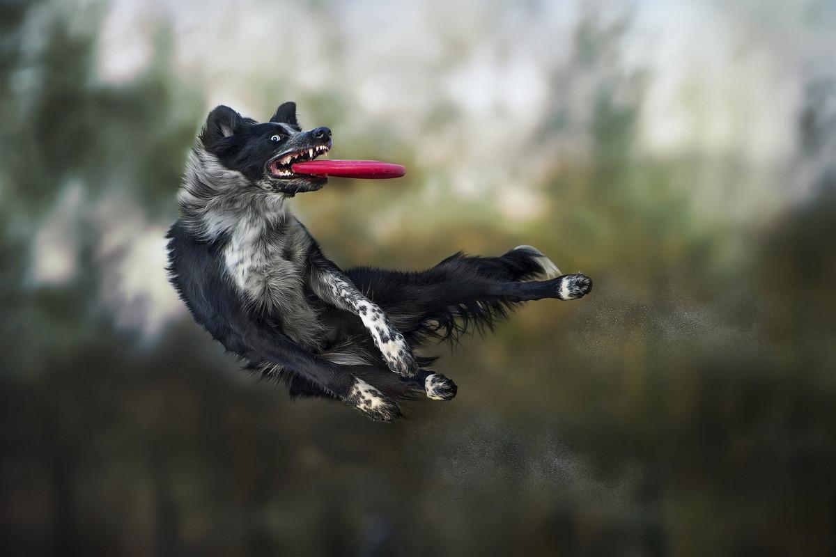 Супер собаки в фотографиях Клаудио Пикколи 3
