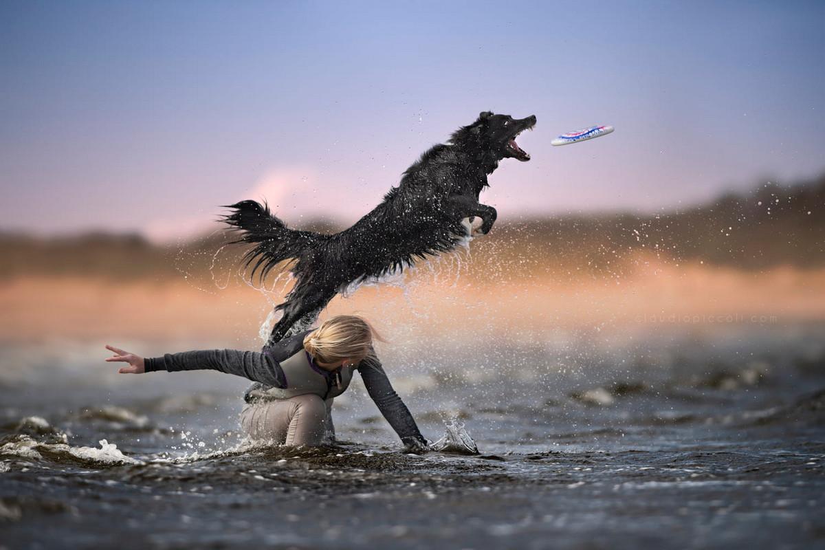 Супер собаки в фотографиях Клаудио Пикколи 30