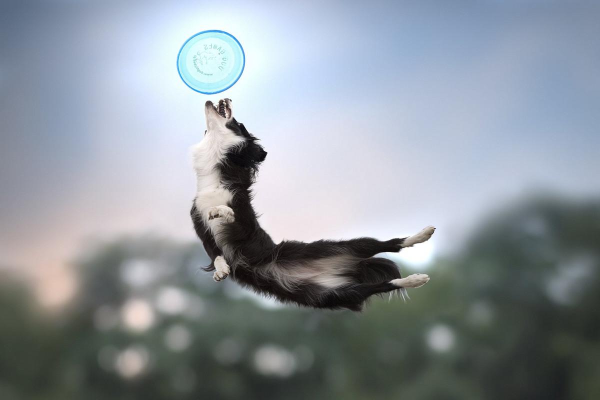 Супер собаки в фотографиях Клаудио Пикколи 4