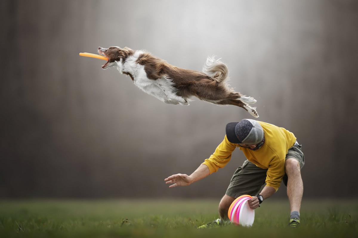 Супер собаки в фотографиях Клаудио Пикколи 7