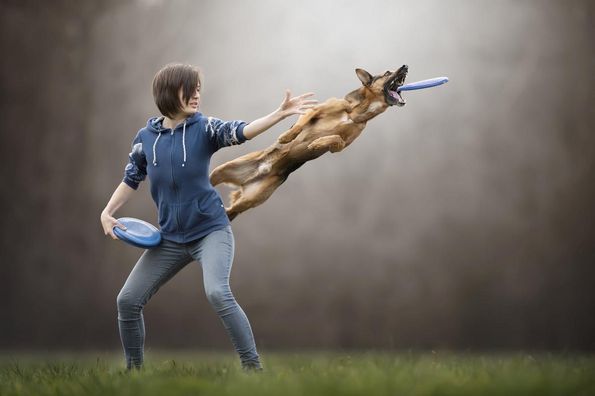 Супер собаки в фотографиях Клаудио Пикколи 8