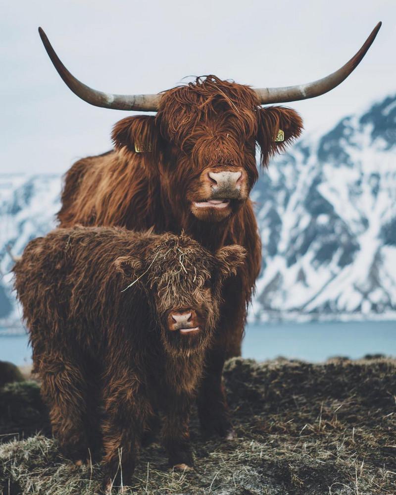 Фотографии Лео Томаса: от портретов орлиной охотницы в Монголии до пейзажей Гренландии 39
