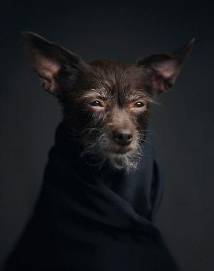 «Человеческие» черты в портретах животных. Фотограф Винсент Лагранж