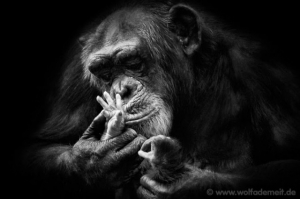 Индивидуальность и очарование животных в художественных фотографиях Вольфа Адемайта
