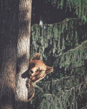 Душа леса. Фотограф Конста Пункка