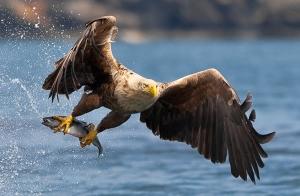 35 Увлекательных фотографий самых разных птиц