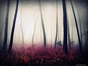 Мистические испанские леса в фотографиях Гильермо Карбальо
