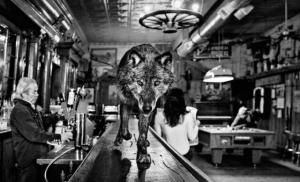 Потрясающие сюрреалистические фотографии диких животных Дэвида Ярроу