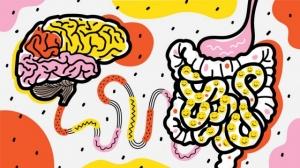 Почему кишечник – второй мозг, и как нами управляют бактерии