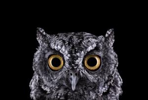 Портреты диких животных от Брэда Уилсона