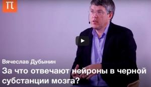 Вячеслав Дубынин о связи дофамина с шизофренией, паркинсонизме и истории нейролептиков