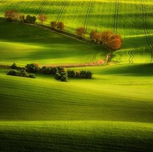 Все оттенки зеленого цвета в цветной фотографии