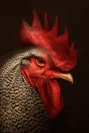 Романтические портреты птиц от Келли Уизем