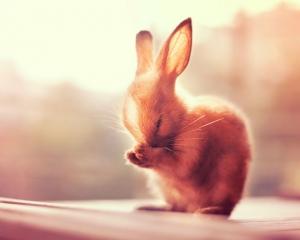 Когда фотомодели - кролики