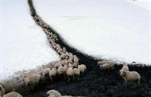 «Путь пастуха». Фотограф Дмитрий Гомберг