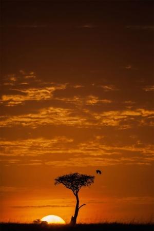 Фантастические закаты в Масаи Мара. Фотограф Пол Гольдштейн