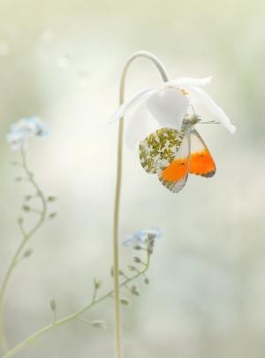 Возвышенные фотографии природы Магдалены Васичек