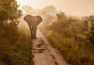 Дикая природа Африки в фотографиях Жако Маркса