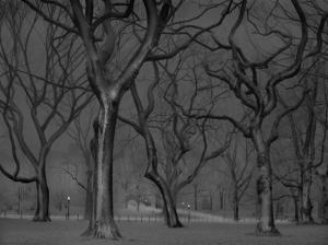 «В глубоком сне»: Центральный парк в снимках фотографа, страдающего бессонницей