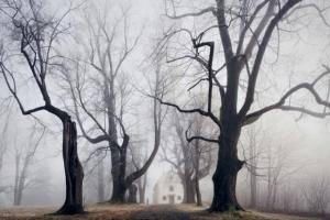 Призрачные лесные пейзажи Килиана Шоенбергера (Kilian Schoenberger)