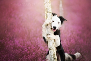 Когда фотограф любит собак - трогательные портреты от Алиции Змысловской