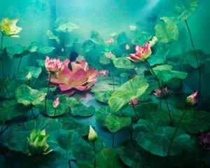 Фантастические фотографии без PhotoShop Джи Янг Ли (JeeYoung Lee)